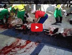 vidéo d'égorgement par des musulmans pacifiques et tolérants, islam tolérance paix